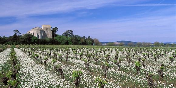 Cathédrale Saint-Pierre de Villeneuve-lès-Maguelone - Hérault le Languedoc © Henri Comte